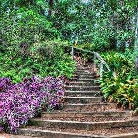 Stairway by Diana Hansen LeGodais - Nature Up Close Gardens & Produce ( nature, plants, gardens, landscape, flowers )