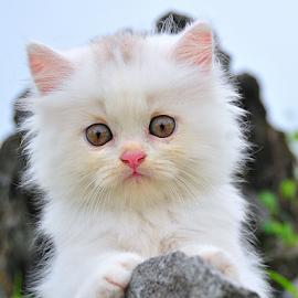 by Wahyu Geghans Jr. - Animals - Cats Kittens ( cats, lion, kitten, cat,  )