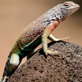 My Desert Friend by Karen Leonard - Animals Amphibians