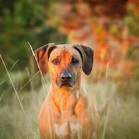 by Lukáš Lang - Animals - Dogs Portraits (  )