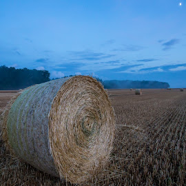 Blue hour in the field by Pascal Hubert - Landscapes Prairies, Meadows & Fields (  )