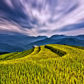Teraced rice fields by Trang Nguyen - Landscapes Prairies, Meadows & Fields
