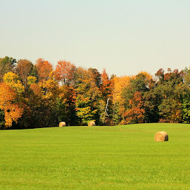Fall time in Wisconsin by April Grunwald - Landscapes Prairies, Meadows & Fields ( field, wisconsin, fall colors, colorful, hay, trees, fall, color, nature )