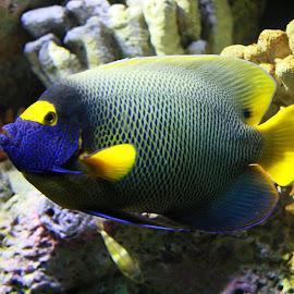 by Prakash Sivaraj - Animals Fish