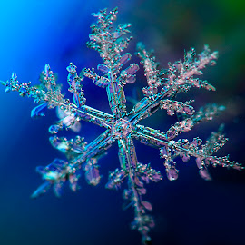 Snowflake on blue by Russell Smith - Nature Up Close Other Natural Objects ( blue, ice, green, flake, snow )