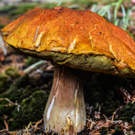 by Jeanne Knoch - Nature Up Close Mushrooms & Fungi