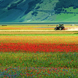 Castelluccio di Norcia by Antonio Zarli - Landscapes Prairies, Meadows & Fields