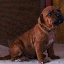 box car pup by Ez Drifter - Animals - Dogs Puppies ( mixed breed, puppies, dogs, boxcar, pup, puppy, pitbull mix )