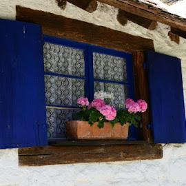 friendly window by Brigi Li - Buildings & Architecture Architectural Detail