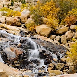 Autumn at the Alluvial Fan by Jennifer McWhirt - Nature Up Close Water ( alluvial fan, autumn, photographybyjenmcwhirt.com, fall, waterfall, colorado, nature up close, rocky mountain national park )