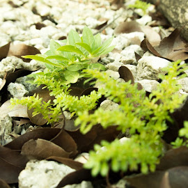 My little world by Matthew Dyson - Nature Up Close Other plants ( green, leaves, small plants, rocks )
