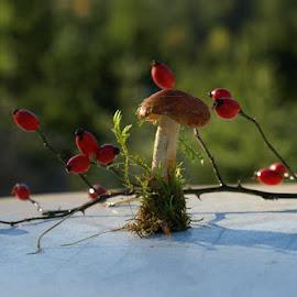by Todica Ioan - Nature Up Close Mushrooms & Fungi