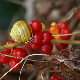 Garden berries by Nikola Vlahov - Nature Up Close Gardens & Produce ( red, nature, fruits, garden, berries )