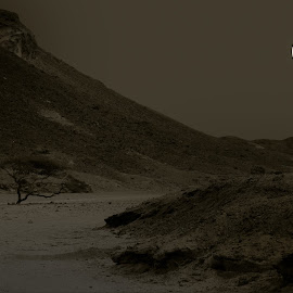 Wadi Gemal by Manu Schwingel - Landscapes Deserts ( sand, wueste, dunes, moon, desert, park, mond, marsa alam, wadi, alam, egypt, gemal, gamal, marsa. national park, mountains, aegypten, trees, wadi gimal, gimal, duenen )