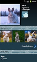 Screenshot of Rabbits