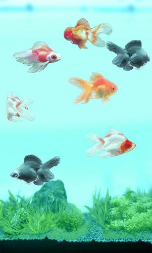 觸摸金魚!