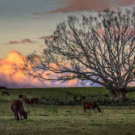 Tree Stretching for last light at Byron by Daryl James - Landscapes Prairies, Meadows & Fields