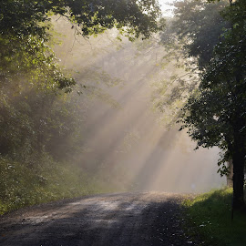 Filtering Morning Sun by David Knowles - Landscapes Travel ( pathway, pennsylvania, back road, forest, sun gleam, road, travel, morning, woods, sun rays, rays, sun, path, trees )