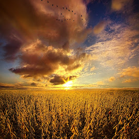 Fly Over Country by Phil Koch - Landscapes Prairies, Meadows & Fields ( vertical, photograph, fine art, yellow, travel, leaves, crop, love, sky, nature, tree, autumn, light, flower, orange, twilight, agriculture, horizon, portrait, environment, dawn, season, serene, outdoors, trees, floral, inspirational, natural light, wisconsin, ray, landscape, phil koch, sun, photography, blue sky, path, horizons, inspired, office, clouds, park, green, back light, scenic, morning, farming, shadows, wild flowers, field, flight, red, blue, color, sunset, peace, fall, meadow, landscapephotography, beam, earth, sunrise, geese, landscapes, hike, mist,  )