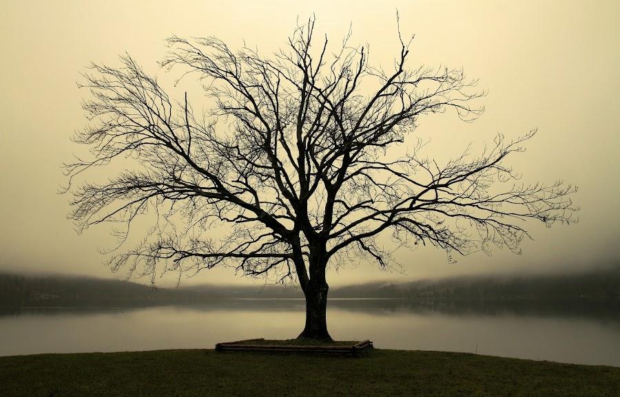 lonely tree by Jože Borišek - Nature Up Close Trees & Bushes ( bohinj-slovenia )