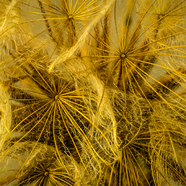 Seeds by Peter Samuelsson - Nature Up Close Other plants