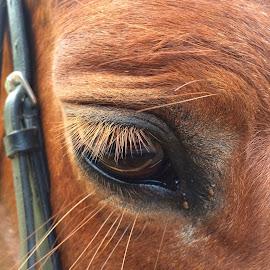 A Gentle Soul by Lorraine  Scotton  - Novices Only Pets ( horses )