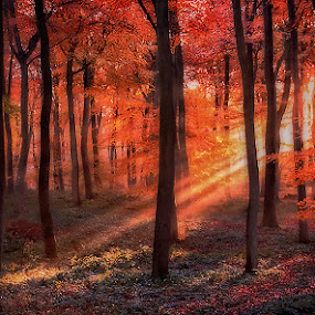 Golden Forest Dawn by Ceri Jones - Landscapes Forests ( autumn, trees, woodland, forest, sunrise, woods )