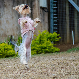 Doggie 1 by Sazar De Bruin - Animals - Dogs Playing ( dog )