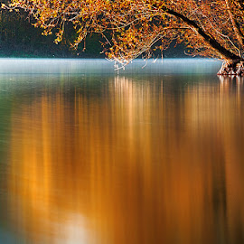 Autumn willow by MIhail Syarov - Landscapes Waterscapes ( orange flower, reflection, autumn, foliage, lake, willow, river, blue, orange. color )