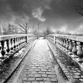 Bridge at Pollok Country Park by Wendy Milne - City,  Street & Park  City Parks ( scotland, park, black and white, bridge, mono )
