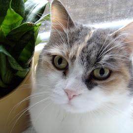 Cat & Plant by Kmetica Vesela - Animals - Cats Portraits ( cat, green, beautiful, white, artistic, amateur, brown, interesting, cute, close up, photo, portrait,  )