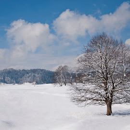 WinterFairytale by Katja Perko - Landscapes Prairies, Meadows & Fields ( clouds, winter, tree, blue, snow, white, fairytale )