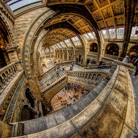 The Museum of Natural History by Matthew Haines - Buildings & Architecture Public & Historical (  )