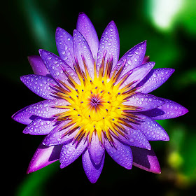 purple123.jpg