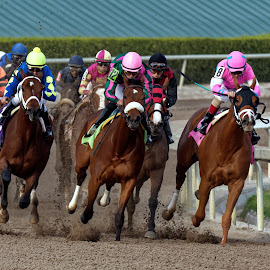 Headed Home by Felix Collazo - Sports & Fitness Other Sports ( horse, track, horse racing, race, competition )