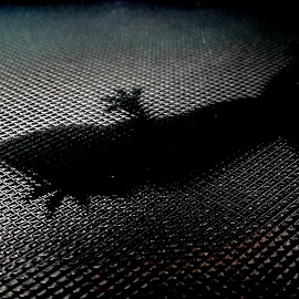 shadow of a lizard by Neil Mukhopadhyay - Abstract Macro