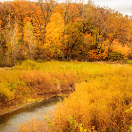 Scene of Gold by Shari Brase-Smith - Landscapes Prairies, Meadows & Fields ( stream, autumn, orange leaves, creek, fall, colored leaves, landscape, yellow leaves, color, colorful, nature )
