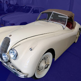 White Jaguar Cabriolet by Victor Eliu - Transportation Automobiles ( automobile, white, oldtimer, transportation,  )