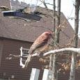 Bird Feeders of Missouri