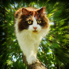 by Jane Bjerkli - Animals - Cats Portraits
