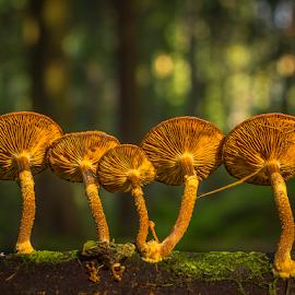 Five fungis by Peter Samuelsson - Nature Up Close Mushrooms & Fungi