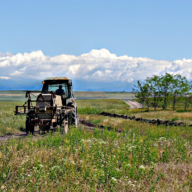 Tractor in Blue-Sky Country by Tamsin Carlisle - Transportation Other ( republic, clouds, europe, agriculture, track, horizon, georgia, road, farming, farm, blue sky, meadow, trees, tractor, fields,  )