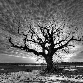 The light by Kim  Schou - Black & White Landscapes ( clouds, winter, b&w, tree, vesterborg, nikond7000 )