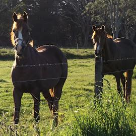 horses by Lacey Murphy - Animals Horses ( horses )