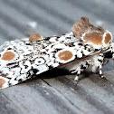 Harris's Three-Spot Moth