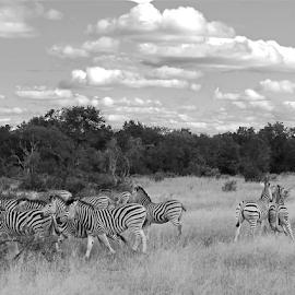 by Jojanneke Vos - Animals Other Mammals