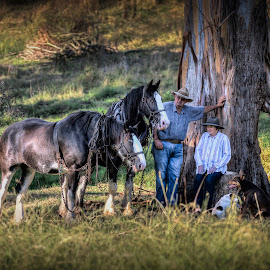 hanging with the horses by Shakenimages Ken - Animals Horses