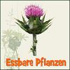 Essbare Pflanzen / Kräuter APP
