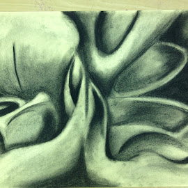 Charcoal Flower by Lacey Dumas - Drawing All Drawing ( charcoal, ap art, art, flower, floral )