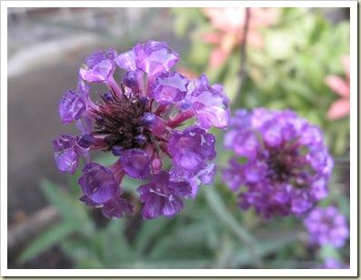 Garden flower  1/320 ISO800 f2.8